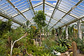 Interior of Princess of Wales Conservatory, Kew Gardens.jpg