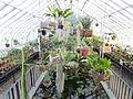 Interior view - Talcott Greenhouse - Mount Holyoke College - DSC04523.JPG