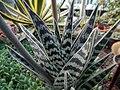 "Iran-qom-Cactus-The greenhouse of the thorn world گلخانه کاکتوس ""دنیای خار"" در روستای مبارک آباد قم- ایران 06.jpg"