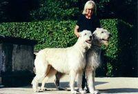 IrishWolfhoundPair.jpg