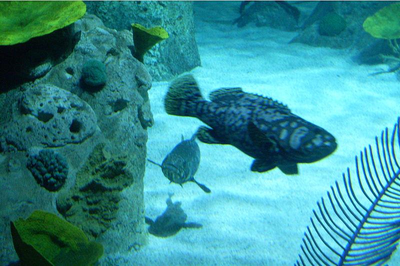 Istanbul Aquarium in Turkey