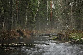 Jänijõgi III
