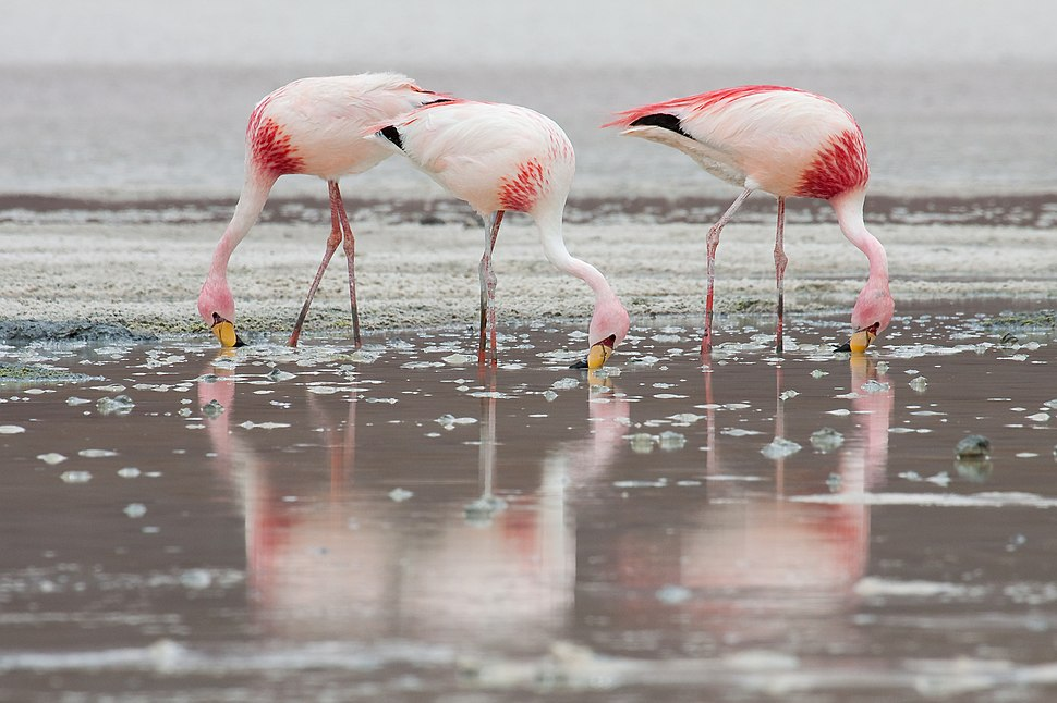 James Flamingos MC