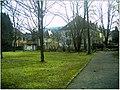 January Frost Botanic Garden Freiburg Safran Wiesen - Master Botany Photography 2014 - panoramio (1).jpg