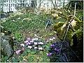 January Frost Botanic Garden Freiburg alpinum - Master Botany Photography 2014 - panoramio.jpg