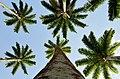 Jardim Botânico, Rio de Janeiro - State of Rio de Janeiro, Brazil - panoramio (4).jpg