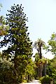 Jardin botanique (9302642053).jpg