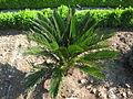 Jardin botanique Dijon 049.jpg