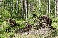 Jezioro Torfy, las, wykroty, Aleksandrów, Wawer, Warszawa.jpg