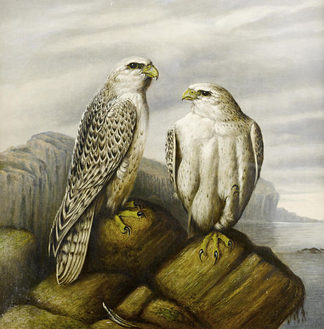 https://upload.wikimedia.org/wikipedia/commons/thumb/b/b8/Josef_Wolf_%28attr%29_Gyr_falcons_on_a_rocky_ledge.jpg/473px-Josef_Wolf_%28attr%29_Gyr_falcons_on_a_rocky_ledge.jpg