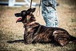 K9 one, one, nothing more vital to battlefield survival 130401-F-NW635-333.jpg