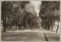 KITLV 12577 - Kassian Céphas - Lane with on both sides tamarind trees at Yogyakarta - 1901-07.tif