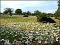 Kažust - Kanat, Supetarska Draga - panoramio.jpg