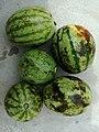 Kaaring (small melons) used in popular Thari dish- Kaaringye ji Bhaaji.jpg