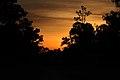 Kakadu sunrise, Northern Territory (8852030513).jpg