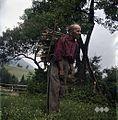 Karl Denovnik, Spodnji Dolič, nosi drva 1963 (2).jpg