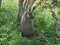 Kenya iseda.jpg