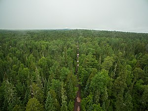 Keweenaw Peninsula - Second-Growth forest near the tip of the Keweenaw, facing west