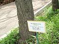 Kharkiv natural sanctuary Institute 13.JPG