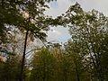 Khimselyshche, Cherkasy, Cherkas'ka oblast, Ukraine - panoramio (220).jpg