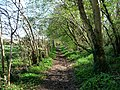 King's way by Bottom Copse - geograph.org.uk - 1270818.jpg
