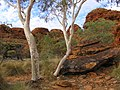 Kings Canyon, Australia, 2004 - panoramio.jpg