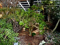 Kirstenbosch National Botanical Garden by ArmAg (38).jpg