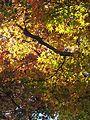 Kiyomizu-dera (24294057044).jpg