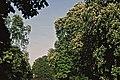 Kleiner Inselweiher 1999 (MS0815).jpg