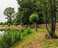 Knotwilg (Salix) aan rand kooiplas. Locatie. de Buismans Einekoai Gytsjerk 02.jpg