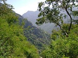 Kolli hills forest.JPG