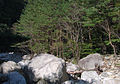 Korea-Gangwondo-Odaesan National Park 1617-07.JPG