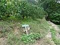 Koya Pilgrimage Routes-Mitanizaka 6.jpg