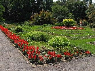 Botanic Garden of the Jagiellonian University - Flower species in the garden