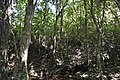 Kudremukha forest.jpg