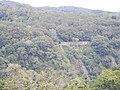 Kuranda QLD 4881, Australia - panoramio (46).jpg