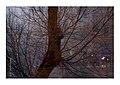 L'albero dei desideri (5381799090).jpg