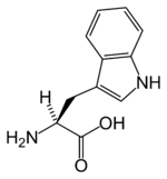 Chemical structure of Tryptophan