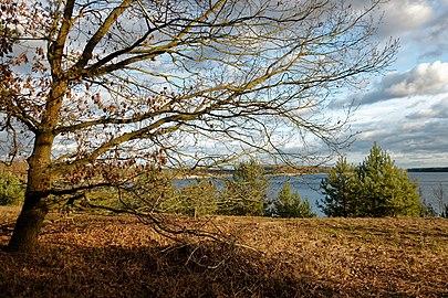 LSG Fauler See-Markendorfer Wald, Helenesee Frankfurt (Oder).jpg