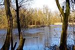 LSG H 00070 Calenberger Leinetal - Teich an der Calenburg (7).jpg