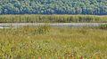 Lac la Pêche - Gatineau Park, Quebec 05.jpg