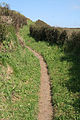 Landewednack, South West Coast Path 2 - geograph.org.uk - 982300.jpg