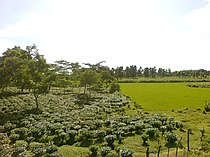 Landscape of Goalpara District of Assam 3012.jpg