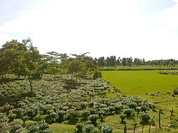 Landscape of Goalpara District of Assam 3012.jpg