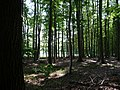 Landschaftsschutzgebiet Waldgebiet bei Neuenkirchen Melle, kurz vor Straßenende - Datei 1.jpg
