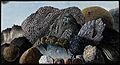 Lava, scoriae and pumice from Mount Vesuvius. Coloured etchi Wellcome V0025293.jpg