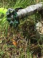 Lawn water hose sprinkler conservation (4).jpg