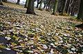 Leaves (54388742).jpeg