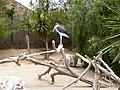 Leptoptilos crumeniferus - marabou - Marabu - marabout d'Afrique - 01.jpg