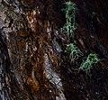 Lichen (24366988872).jpg